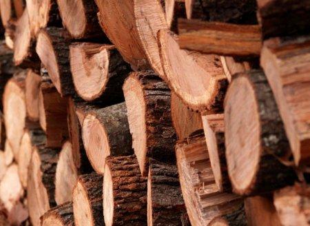 Физические свойства древесины